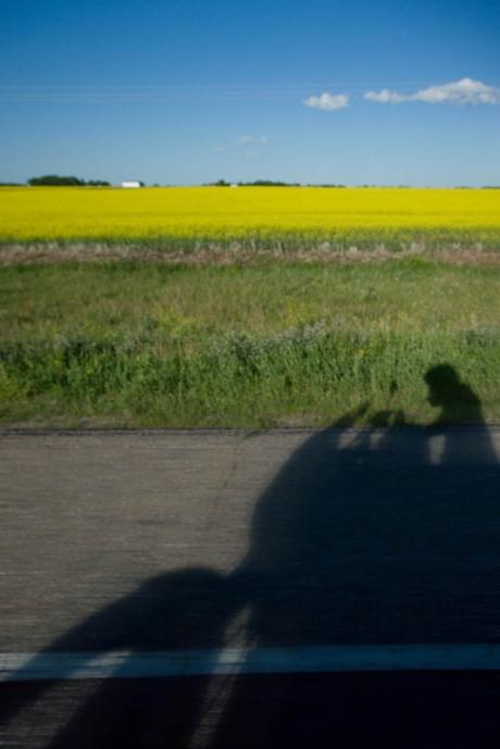 Riding through a sea of canola fields.