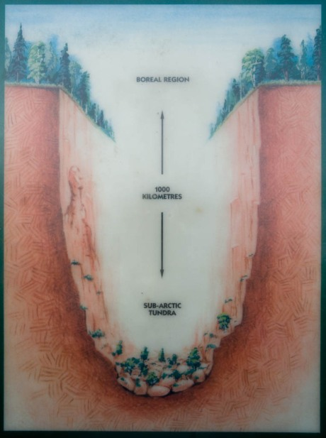 Diagram showing the biological diversity in Ouimet Canyon.