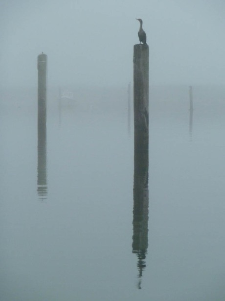 Still life with bird on a piling.