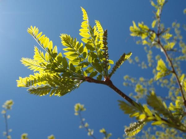 Springtime in Fruita.