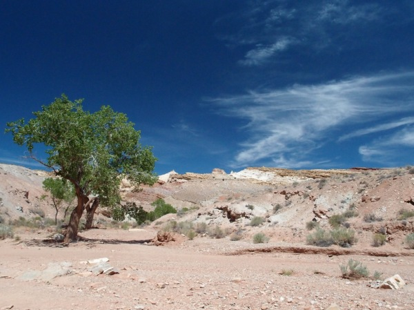 Hiking up the wash leading into Little Wild Horse and Bell Canyons.