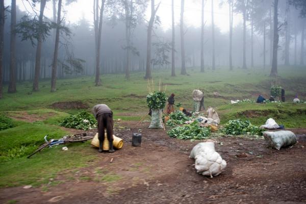 Farming in the fog.