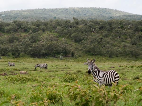 First Punda Milia (zebra) sighting of the trip.