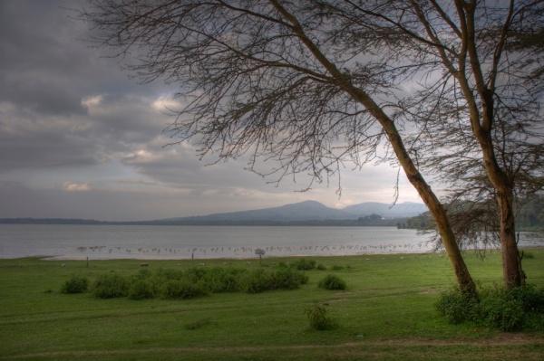 Flamingos dot the shoreline of Lake Naivasha. HDR Composite.