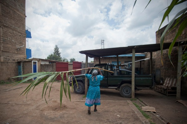 Barbra's grandmother Shosho loads freshly cut sugarcane into her land rover to take home for our afternoon snack.