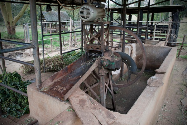 A machine on Shosho's farm to cut napier grass into edible size chunks for the cows.