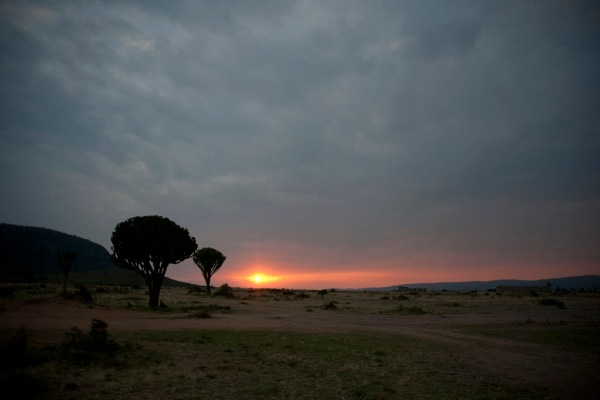 A beautiful Serengeti sunrise means it's time to go find some animals eating breakfast.