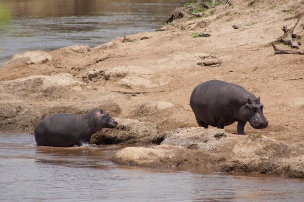 Hungry hungry hippos.